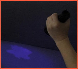 Search for urine stains with a black light